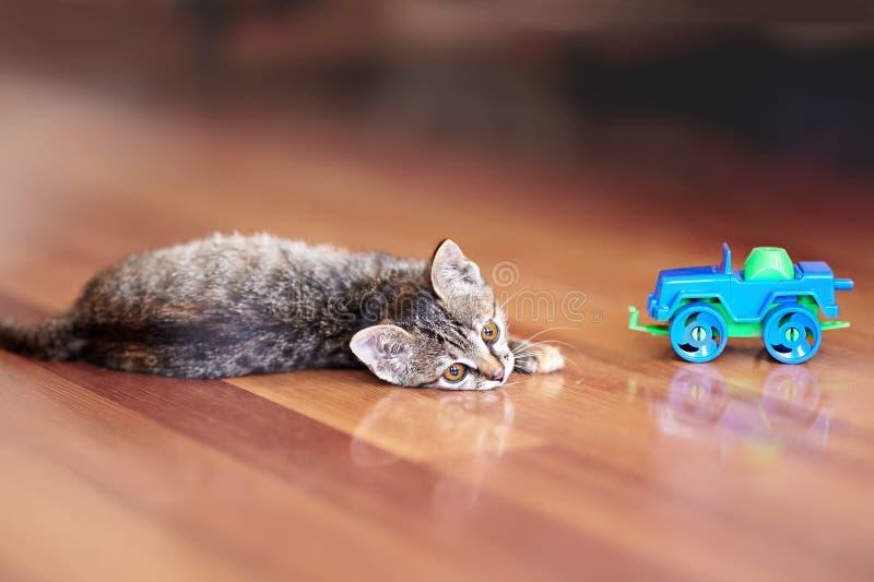 Den gulliga lilla katten av strimmig kattfärg ligger på trägolvet med barnleksakbilen Nätt kattunge med gula ögon hemma royaltyfri fotografi