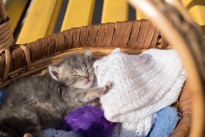 Den gulliga lilla kattungen sover i en korg med trådar för att sticka arkivfoton