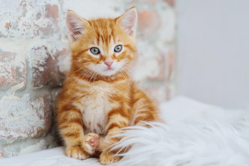 Den gulliga lilla röda kattungen sitter arkivfoto
