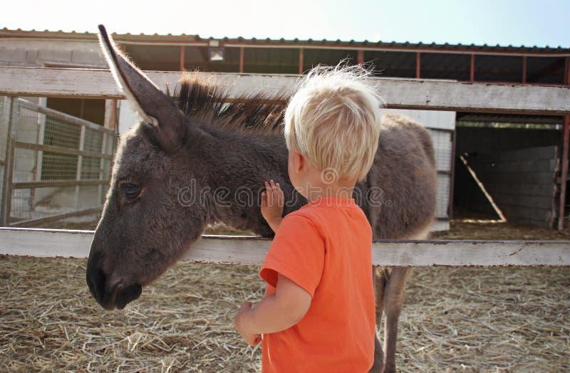 Den gulliga litet barnpojken som trycker på och slår, behandla som ett barn åsnan på lantgård i Cypern royaltyfri bild
