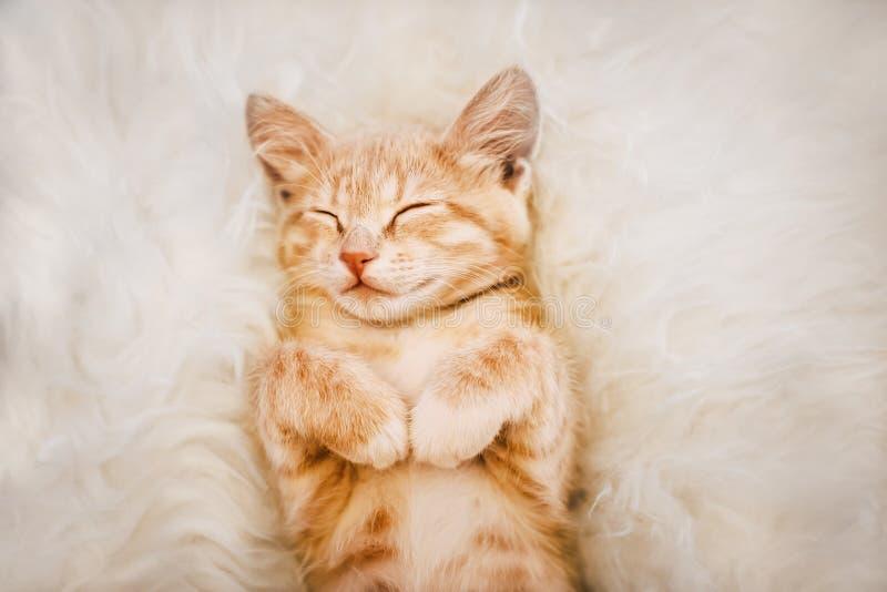 Den gulliga ljust rödbrun kattungen är sova och le på en pälsfilt Begrepp hemtrevliga Hyugge och bra morgon royaltyfri foto