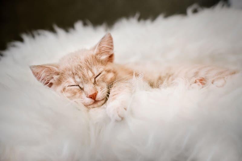 Den gulliga ljust r?dbrun kattungen ?r sova och le p? en p?lsfilt Begrepp hemtrevliga Hyugge och bra morgon royaltyfri foto