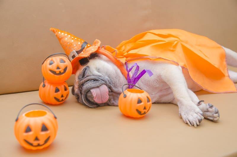 Den gulliga mopshunden med dräkten av lycklig halloween dagsömn vilar på s royaltyfria bilder