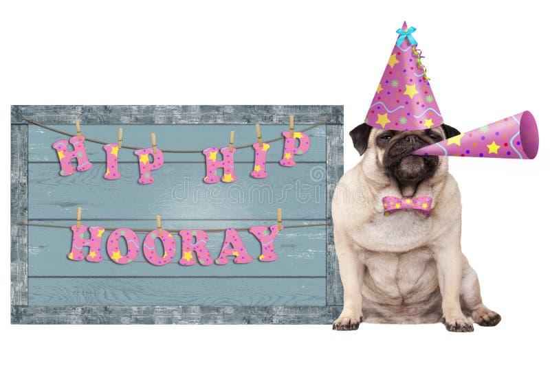 Den gulliga mopsvalphunden med rosa färger festar hatten och det horn- och gamla blåa trätecknet med det festliga höfthöfthooray  royaltyfri bild