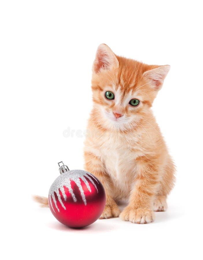 Den gulliga orange kattungen med stort tafsar sammanträde bredvid en julnolla royaltyfria foton