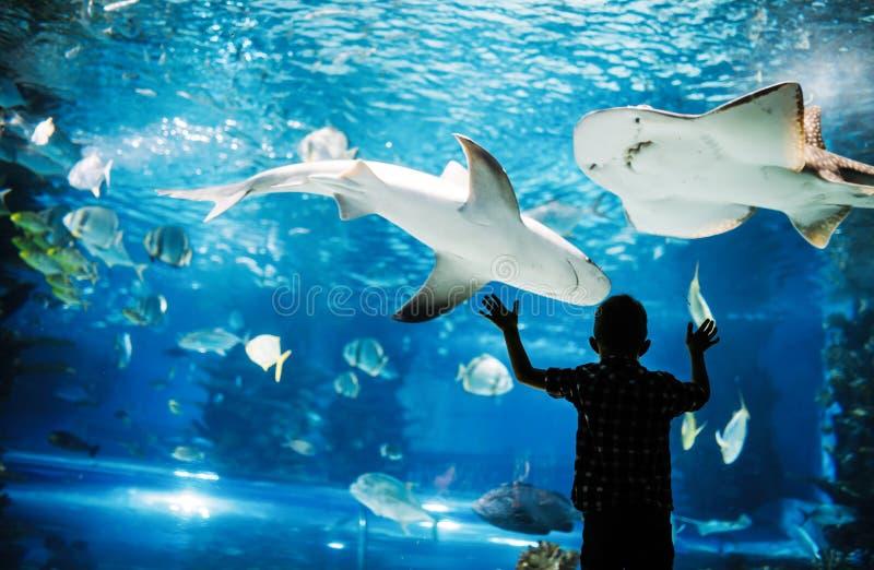 Den gulliga pojken h?ller ?gonen p? fiskar i akvarium arkivbild