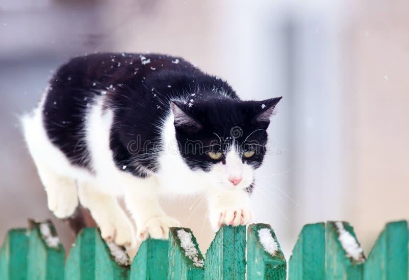 Den gulliga roliga hem- katten går på ett trästaket i en by i trädgården under ett snöfall och blickar framåt arkivbilder