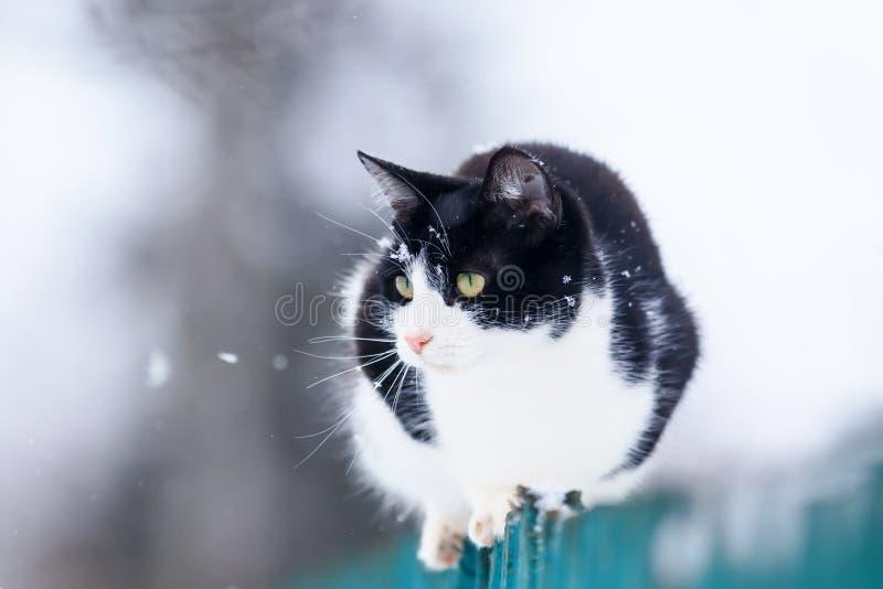 Den gulliga roliga inhemska kattungen sitter på ett trästaket i byn i trädgården under ett snöfall och blickar in i avståndet arkivbilder