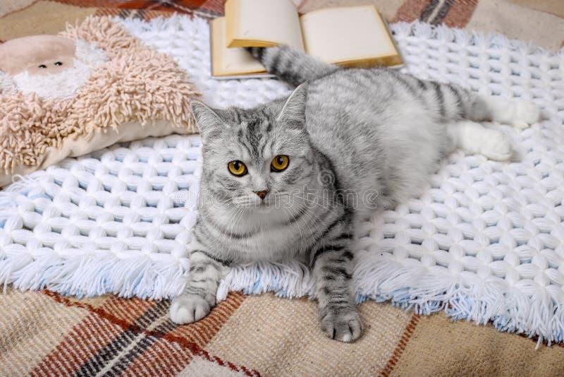 Den gulliga strimmig kattkatten sover i sängen på den varma filten Kall höst- eller vinterhelg, medan läsa en bok och dricka varm royaltyfri fotografi