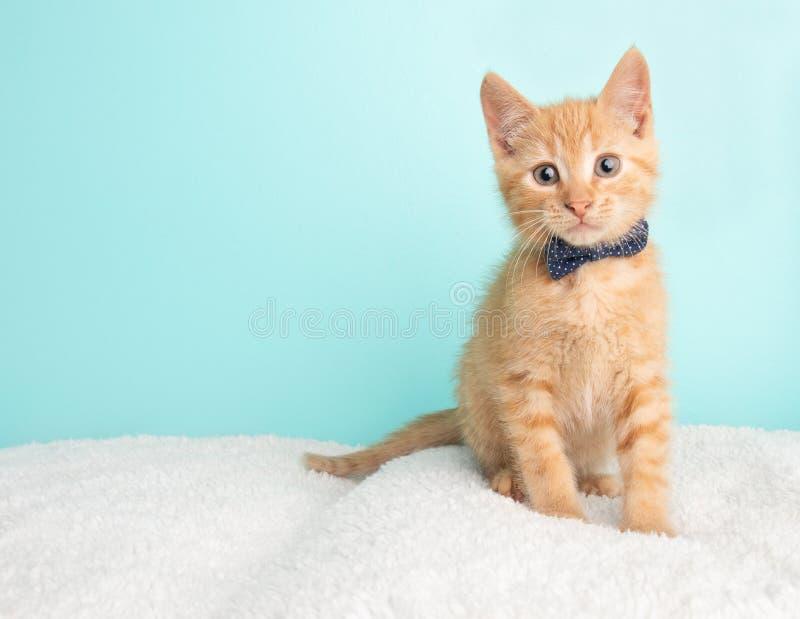 Den gulliga unga apelsinen Tabby Cat Kitten Rescue Wearing Blue och vita Poka prack sittande se för fluga till vänstersidan arkivbilder