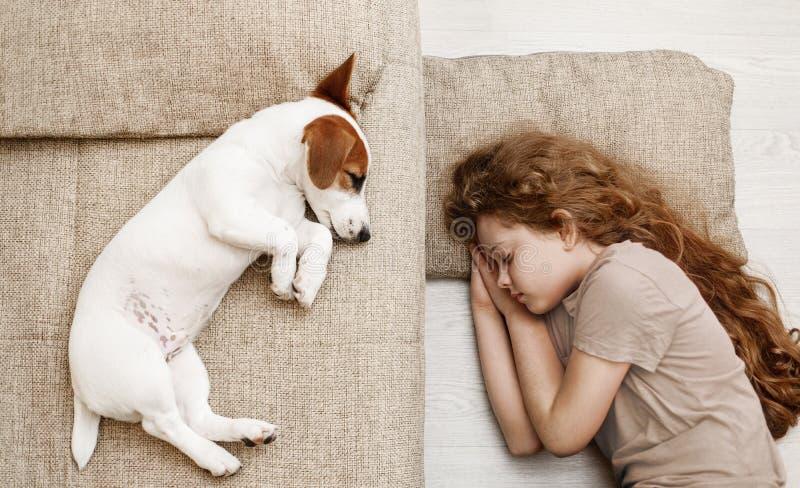 Den gulliga valpen sover på sängen royaltyfria foton