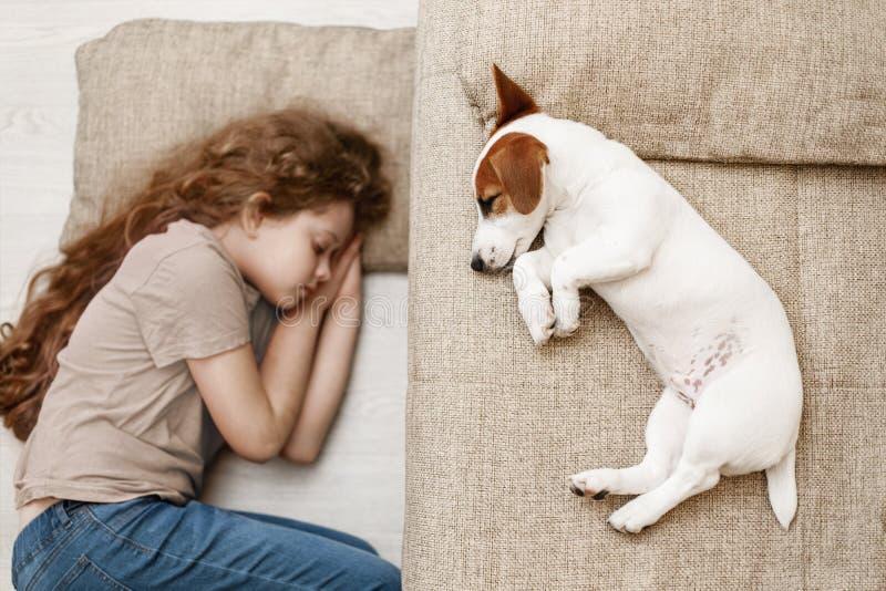 Den gulliga valpen sover på sängen, och barnet sover på golvet royaltyfri fotografi