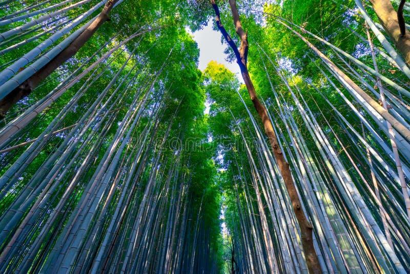 Den härliga bambuskogen stiger ovanför himlen royaltyfri fotografi