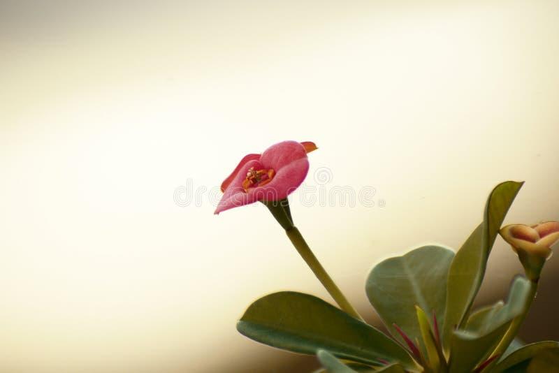 Den härliga blomman arkivbilder