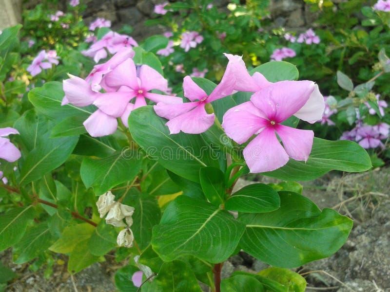 Den härliga blomman i trädgård arkivbild