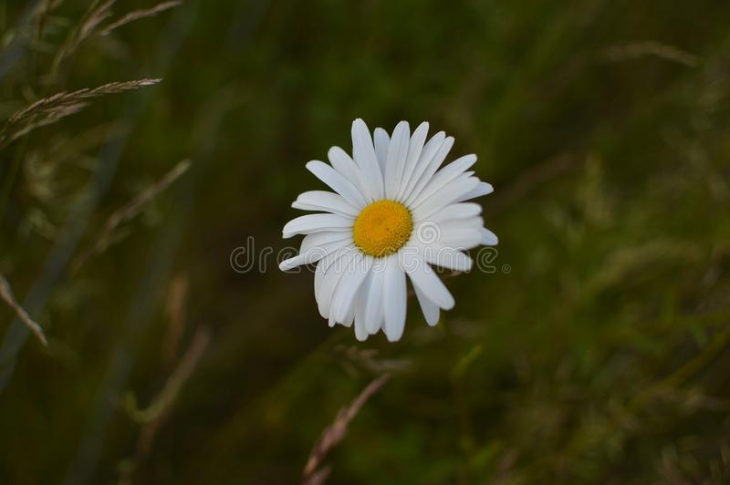 Den härliga blomman med inget redigerar arkivfoto