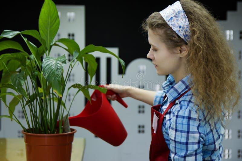 Den härliga blomsterhandlaren för den unga kvinnan bevattnar växten i blomsterhandel royaltyfri bild
