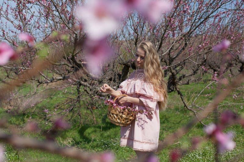 Den härliga blonda kvinnan samlar rosa blommor i en korg royaltyfri bild