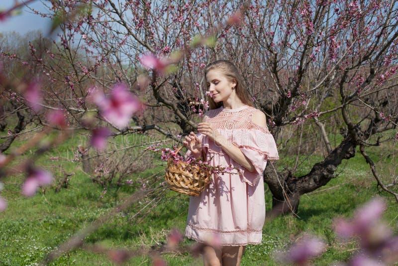Den härliga blonda kvinnan samlar rosa blommor i en korg fotografering för bildbyråer