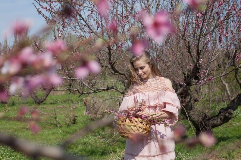 Den härliga blonda kvinnan samlar rosa blommor i en korg royaltyfria bilder
