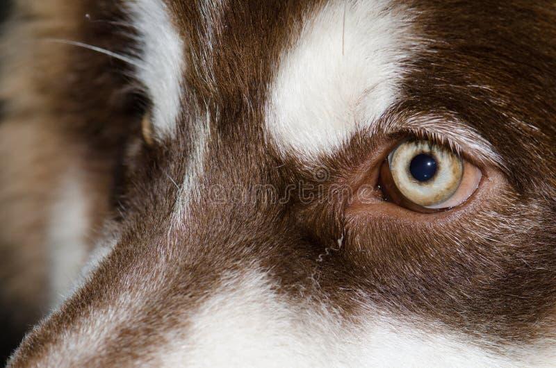 Den härliga bruna hunden synar glänsande ljus royaltyfri foto