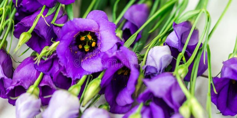Den härliga buketten av den purpurfärgade eustomaen blommar, Lisianthus royaltyfri bild