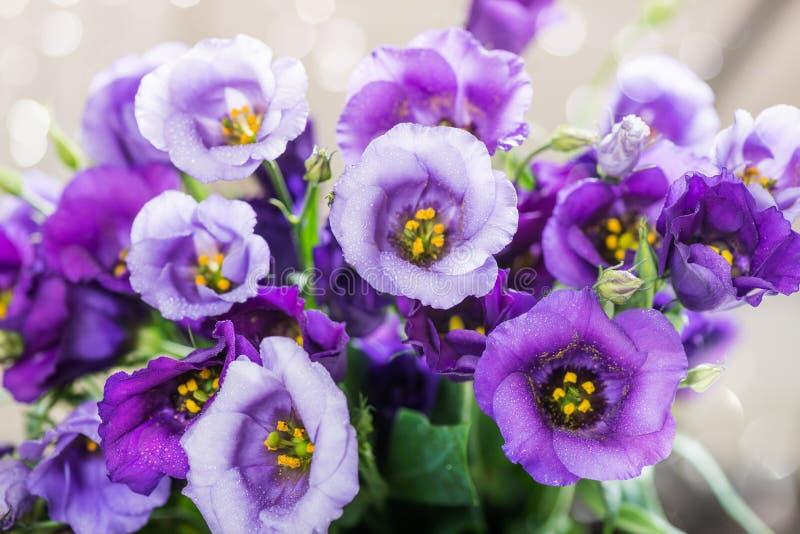 Den härliga buketten av den purpurfärgade eustomaen blommar, Lisianthus royaltyfri foto