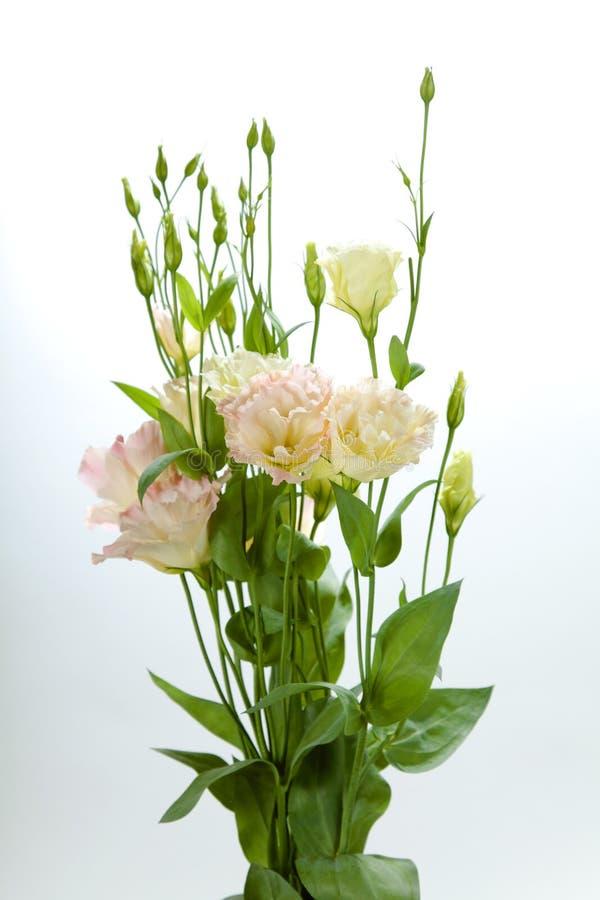den härliga buketten blommar pink arkivbilder