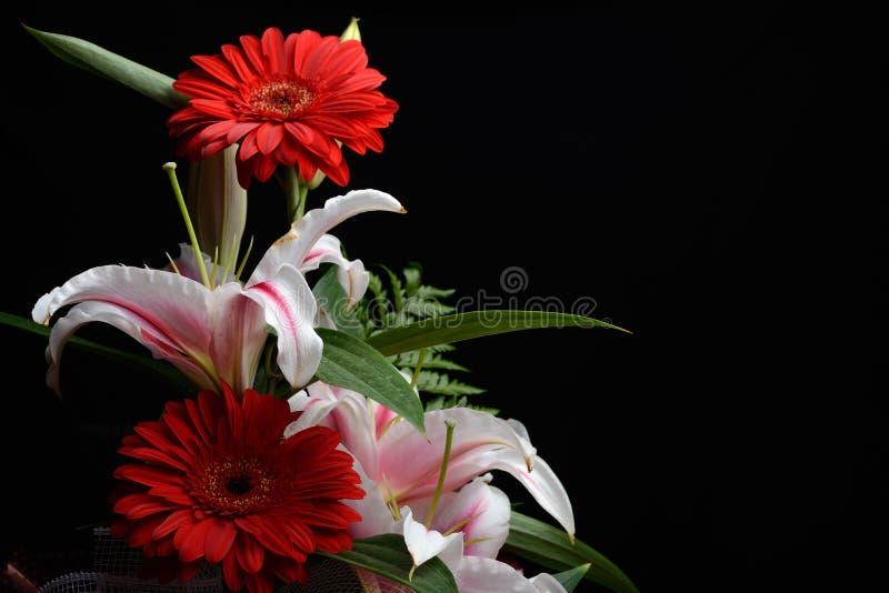 Den härliga buketten som gjordes från röd gerbera och vita liljor, satte till arkivfoton