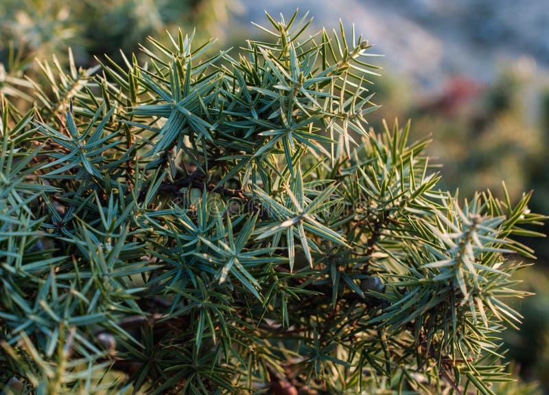 Den härliga buskeen växer i hösten, taggig växt arkivfoto