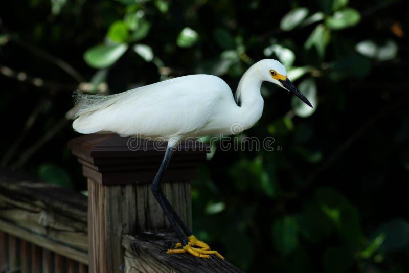 Den härliga fågeln står på jordning och ser ner till sidan royaltyfri bild