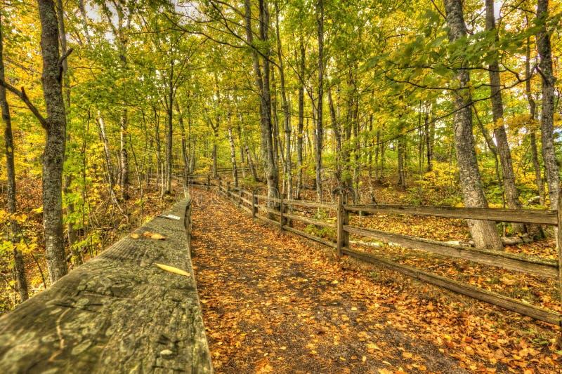 Den härliga gångbanan med nedgången färgar in i Michigan USA royaltyfria bilder