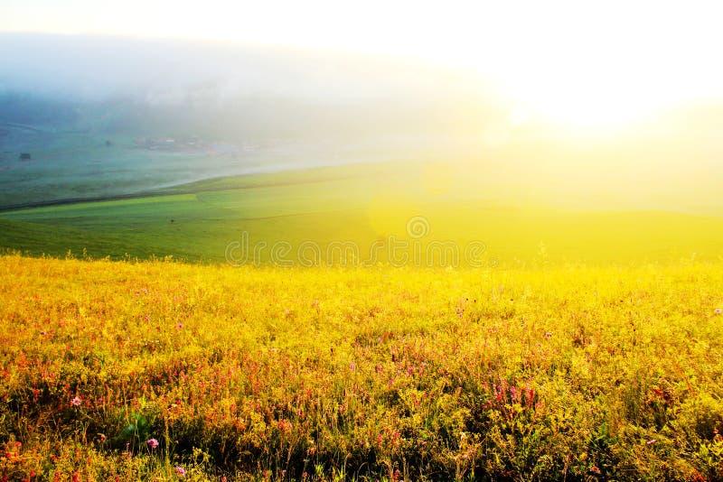 Den härliga grässlätten (30) fotografering för bildbyråer