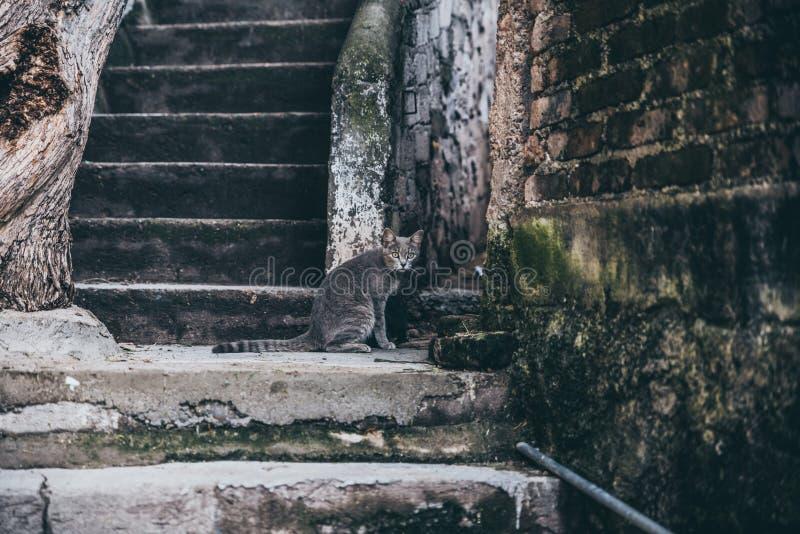 Den härliga gråa katten med guling synar i en gränd arkivbild