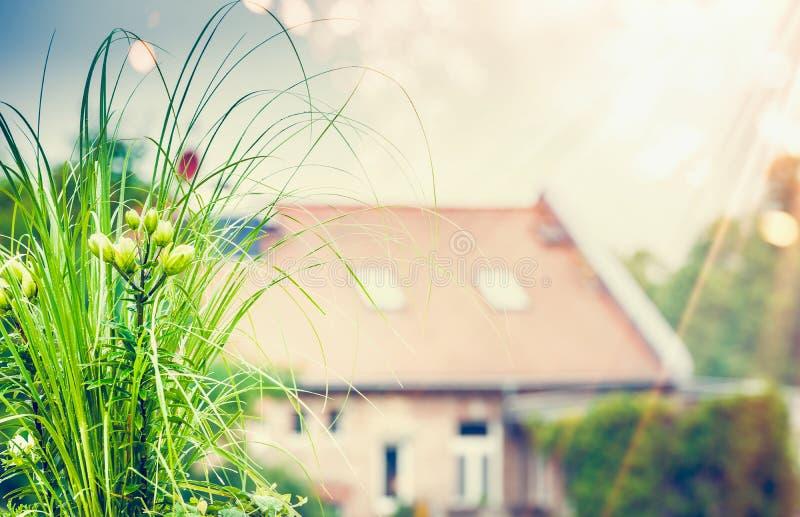 Den härliga gröna växten och blommor på taket terrasserar arbeta i trädgården som är stads- royaltyfria foton
