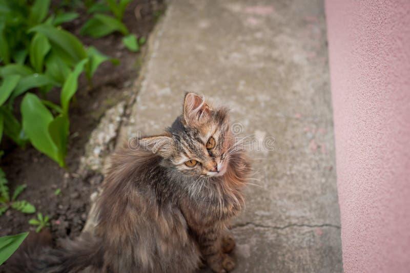 Den härliga gulliga katten sitter och väntar på mat royaltyfria foton