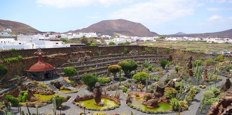 Den härliga kaktusen parkerar på den Lanzarote ön royaltyfri foto