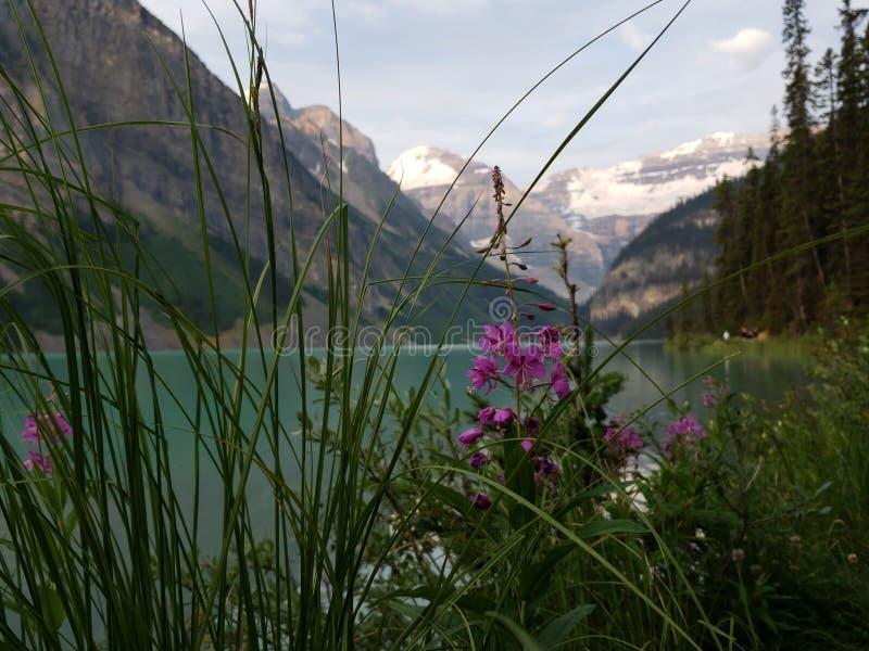 Den härliga kanadensaren Rocky Mountains fotografering för bildbyråer