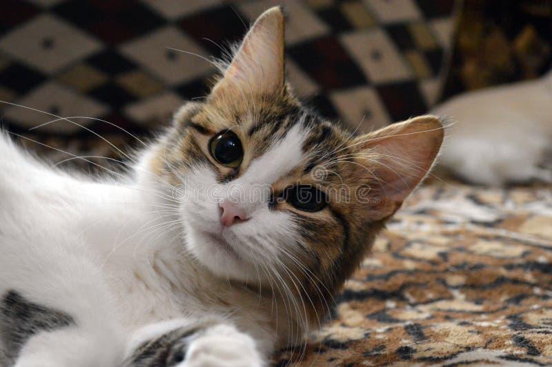 Den härliga katten gör selfie royaltyfri fotografi