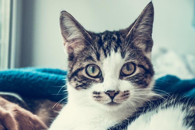 Den härliga katten ser med stora ögon arkivfoton