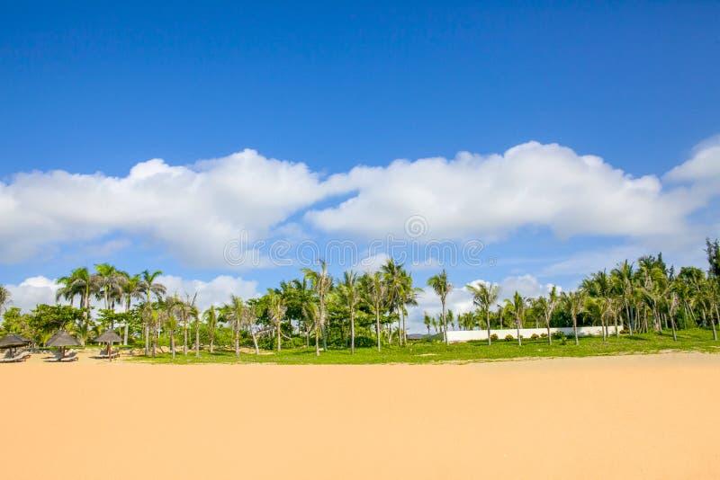 Den härliga kokosnöten gömma i handflatan och sätter på land under blåa himlar och vita moln - haitangfjärden, hainan, Kina arkivfoto