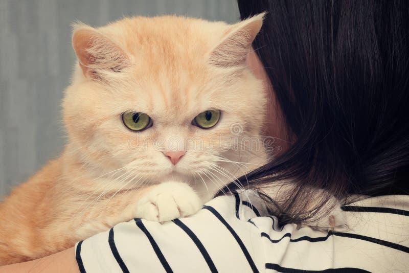 Den härliga kräm- katten sitter på skuldran av enhaired flicka arkivbild