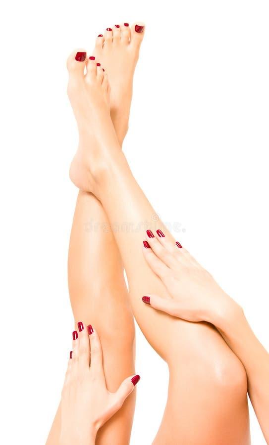 den härliga kvinnlign hands ben arkivbild