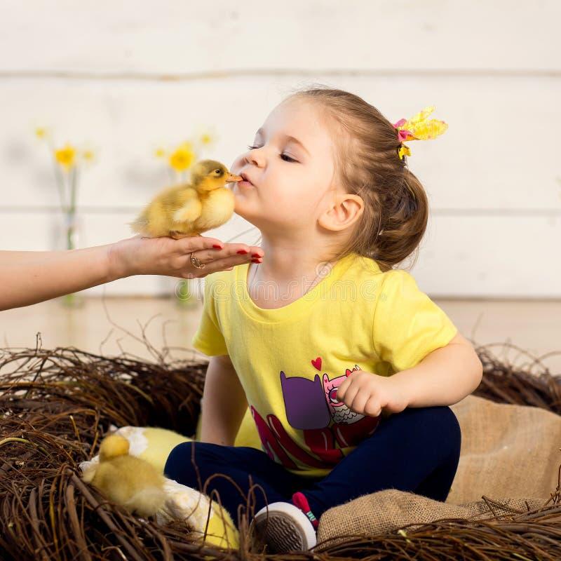 Den härliga lilla flickan kysser en gullig fluffig påskankunge arkivfoton
