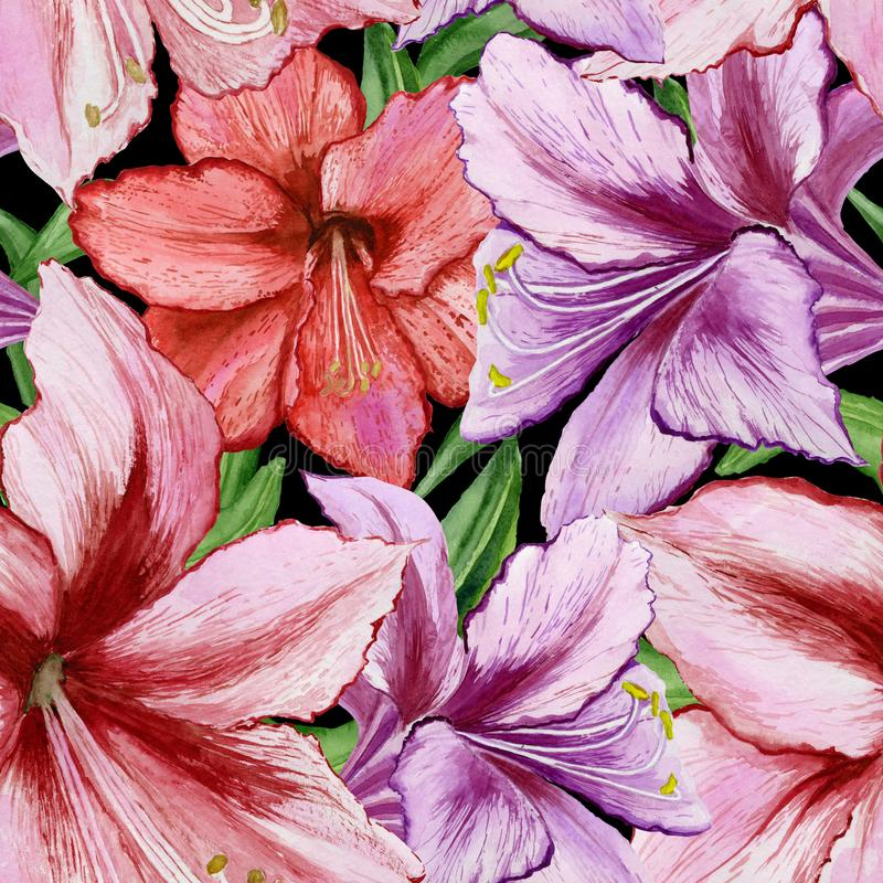 Den härliga livliga lilan och den röda amarylliets blommar på svart bakgrund Seamless fjädra mönstrar för Adobekorrigeringar hög  royaltyfri illustrationer