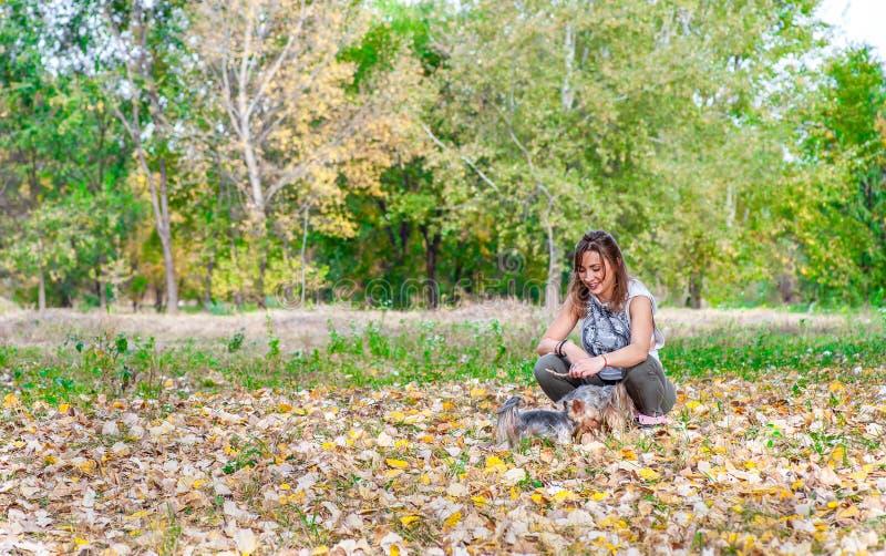 Den härliga lyckliga unga flickan med hennes valp för hunden för den Yorkshire terriern som tycker om och spelar i höstdagen i, p fotografering för bildbyråer