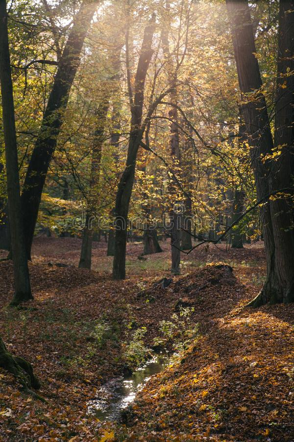 Den härliga lynniga hösten parkerar med gula och gröna träd, en ström och solsignalljuset av slotten Blatna för republiktown för  royaltyfri foto