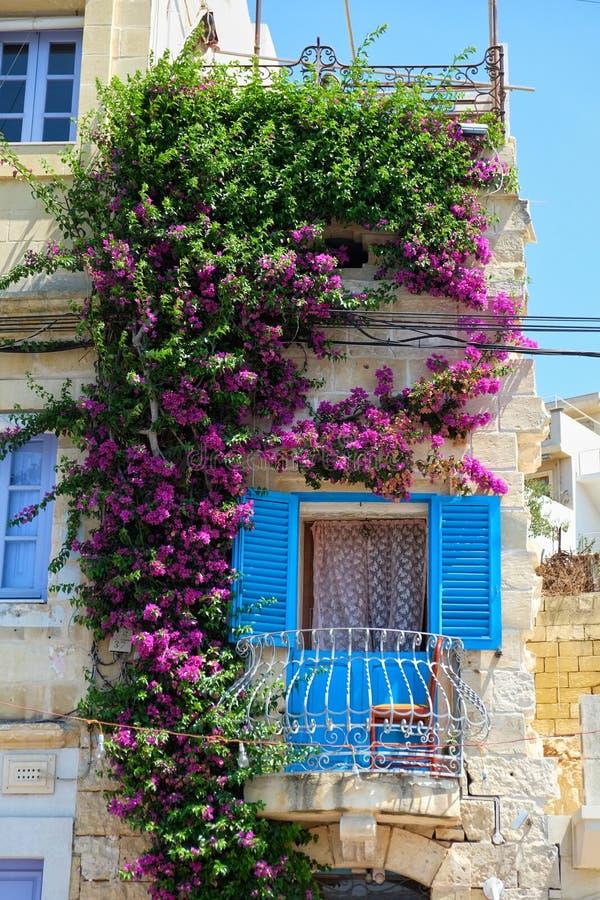 Den härliga maltesiska balkongen flätade ihop med bougainvillean på Birgu royaltyfri fotografi