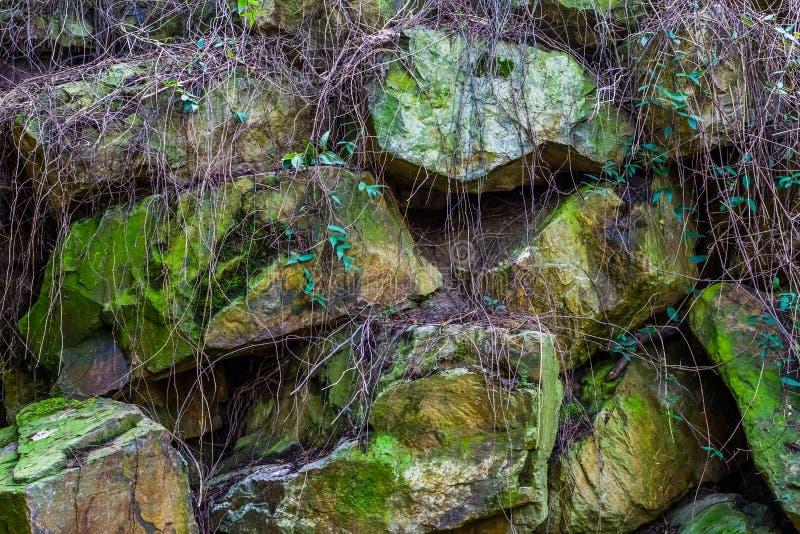 Den härliga modellen av stort vaggar täckt i grön mossa och växter, naturlig bakgrund royaltyfri fotografi