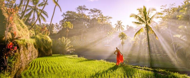 Den härliga modellen i röd klänning på Tegalalang ris terrasserar royaltyfri bild